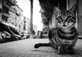 Unique cat close up portrait and highly detailed of a beautiful alley with black and white colors in a summer evening Stock Image