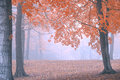 Unique foggy autumn forest background a and colorful that can have text added over it Royalty Free Stock Photo