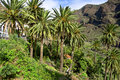 Unique Nature on La Gomera Stock Image