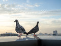 Unique perspectives two pigeon in the high tower in city background. Life in city Royalty Free Stock Photo
