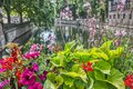 Colorful flowers on a canal in Strasbourg