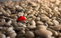 Unique red stone standout stand out in crowd of white stones Stock Images