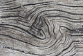 Unique tree texture Royalty Free Stock Photo