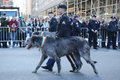 United States Army Ranger with Irish Wolfhound marching at the St. Patrick`s Day Parade in New York.