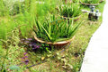 Unkempt, overgrown garden Royalty Free Stock Photo