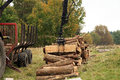 Unloading firewood.  Autumn works Stock Photo