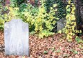 Old Forgotten Grave and Ivy Graveyard Royalty Free Stock Photo