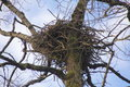 Unoccupied eagle s nest an view of an Royalty Free Stock Image