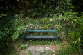 Unoccupied green bench surrounded by plants old and foliage concept photo of solitude and anxiety Stock Photos