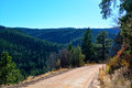Unpaved Dirt Mountain Road on the Edge of a Cliff in a Pine Tree Royalty Free Stock Photo