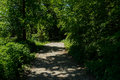 Unpaved path in shaded woods on sunny summer day Royalty Free Stock Photo