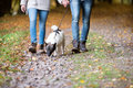 Unrecognizable couple with dog walking in autumn forest Royalty Free Stock Photo