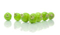 Unripe green apples on white background Stock Photography
