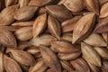 Unshelled pili nuts full frame Royalty Free Stock Photo