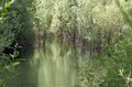 Unspoilt environment with the swamp and marsh plants amazing Royalty Free Stock Image