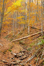 Untouched mountain forest in autumn landscape Stock Photography