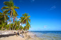 Untouched palm beach tropical with trees in dominican republic Stock Photography