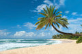Untouched sandy beach with palms trees and azure ocean in background panorama Royalty Free Stock Photo