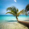 Untouched tropical beach in maldives outdoor shot Royalty Free Stock Images