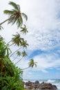 Untouched tropical beach of sri lanka Royalty Free Stock Photo