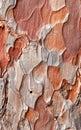 Unusual Tree Bark