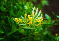 Unusual yellow flower Royalty Free Stock Photo