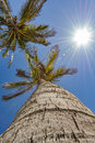 Up view of a palm tree on a beautiful day
