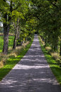Uphill road under trees germany Stock Images