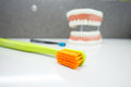 Upper and lower jaw dental model with toothbrushes Royalty Free Stock Photo