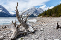Upperlake canada view through driftwood at Stock Photo