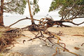 Uprooted trees and beach erosion after tropical cyclone hits island