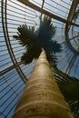 A view of  palm tree Royalty Free Stock Photo