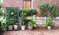 Urban court vegetable garden container gardening in yard of setting with tomatoes peppers zucchini cucumbers Royalty Free Stock Photos