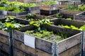 Urban Garden And Farming In Sp...