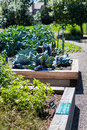 Urban garden Royalty Free Stock Photo