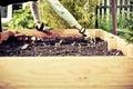 Urban gardening bio cultivation Royalty Free Stock Photo