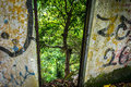 Urban ism and nature this picture take the contrast of live a powerful combination Royalty Free Stock Photo