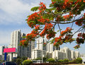 Urban landscape beautiful haikou city of hainan island of china Royalty Free Stock Photography