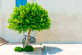 Urban landscape lonely tree and bike Stock Images