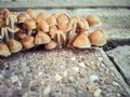 Urban mushrooms Royalty Free Stock Photo