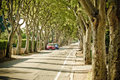 Urban tree line street in Zadar Royalty Free Stock Photo