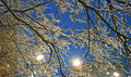 Urban winter frozen naked tree branches at evening Royalty Free Stock Images