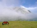 Urkiola mountain with a horse in basque country and fog Royalty Free Stock Image