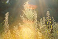 Urtica dioica, often called common nettle or stinging nettle (al