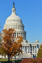 Us capitol building in autumn washington dc usa october with trees yellow leaves Stock Image