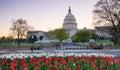 US Capitol  Spring Washington DC