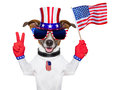 Usa american dog with peace fingers waving flag Royalty Free Stock Photos