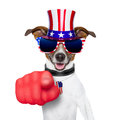 Usa american dog pointing with big finger at you Royalty Free Stock Photo