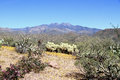 USA, Arizona: Spring Landscape at the Foothills of Four Peaks Royalty Free Stock Photo
