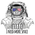 Usa flag glasses American flag United states flag Wild cat Manul wearing space suit Wild animal astronaut Spaceman